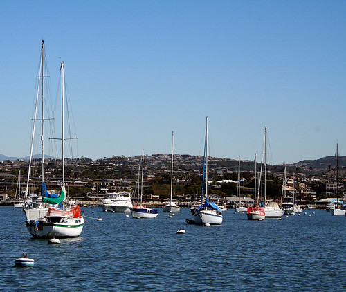 Balboa Boats, Protected from Sea Lions