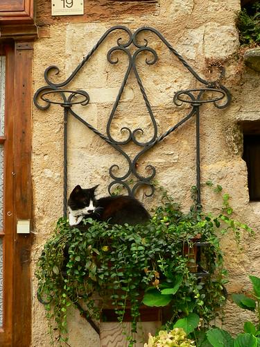 Chat à Cordes