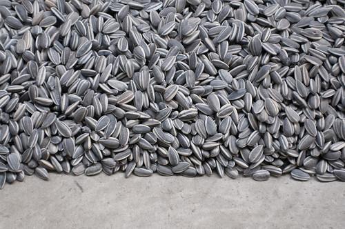 Tate Modern Ai Weiwei Sunflower Seeds Unilever Series