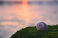 spiral (Laurarama) Tags: sunset sea summer rock spiral moss nikon gap shell j