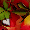 Forever autumn (cattycamehome) Tags: autumn red orange brown macro green fall love loss leaves yellow loving tag3 silver hearts gold golden lyrics maple pain october warm tag2 colours tag1 seasons heart bright song warmth romance waroftheworlds loveyou catherineingram justinhayward xxxxx xoxoxoxox xxxxxxxx xoxoxoxoxoxox abigfave foreverautumn hopeyouaredoingwell october2007 cattycamehome soulsresonance loveandhugsdeargirlfriend cfoct johnbaileymymuchbelovedandadmiredenglishwriterartist xoxoxoxoxforyoucathyfromkiki loveandhugsforever missyouandyourpics