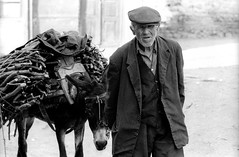 ALBANIA (D J Clark) Tags: old travel man documentary donkey albania firewood korce