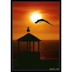 Flying Low (mac_raw) Tags: hello sunset beach bravo seagull hugs bestfriend bff bighugs xxxxxxx missyouall  magicdonkey magiccookie  missyoutoo mywinners hehehehehehehe artlibre henyo xoxoxoxoxoxoxoxoxoxoxoxo loveyoulots aplusphoto magicdonkey25 ultimateshot supercookie goldenphotographer megashot macraw juniorwomble ultimatecookie cookieisthebest xoxoxoxoxoxoxoxoxoxoxox xxxxxxxxxxxxxxxxxxxxxxxxxxxxxxxx hakhakhakhakhak ultimatebird loveandhugsdeargirlfriend theroadtoheaven thegoldendreams missedyourassxxxxxxxxxxx loveulots amazingsupercookie superfriendcookie hakhakhakhakhakhak enjoyadeliciousbreakfast missingyouxxxxxxxxxxxx cooltags tyxoxoxoxoxoxoxoxoxoxoxo supercookieandsuperfriend thankstakeiteasymyfriend lolsorrycookieloliknowyoudonylikehihi hellocookie helllllooooooxxx gladyouareback sooogladyouareback goodmorningmydearestcookie biiiiighugstoyoumyfriend welcomebackpicturefabolous sorryimissedyouiwasaway watchingsnlthanksgivinglol mondocafeclub
