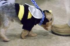 petsmart costumecontest howlween