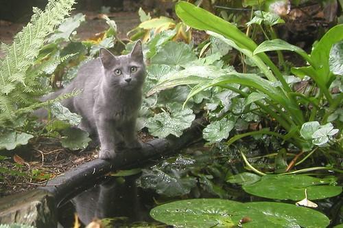 Ladoga's kittens 1859509153_d980b7c23b