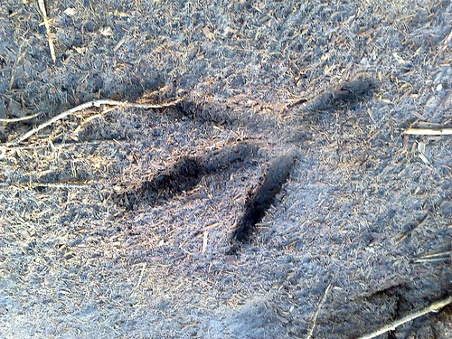 Bird Track