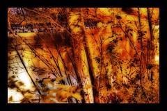 Fiery Dreams Of Fall (Jonny Jelinek) Tags: autumn tree fall leaves night photoshop reflections fire lights nacht herbst feuer bäume orton flammen danubecanal thegoldenmermaid