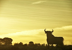 toro cubillas (_tonidelong) Tags: road españa de spain carretera andalucia granada ontheroad toro osborne enlacarretera cubillas n323