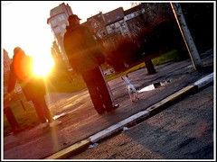 Hond geniet van de zonsondergang