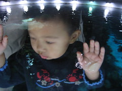 Looking into the tank