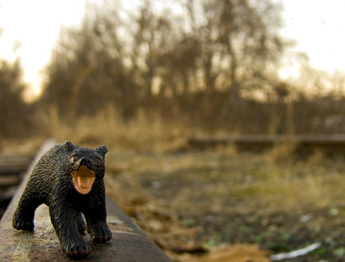 Little Bear!