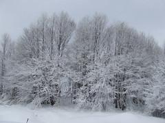 Ghiacciati... (Tj86) Tags: neve montagna freddo calabria tj sila cosenza fotograficamente tj86