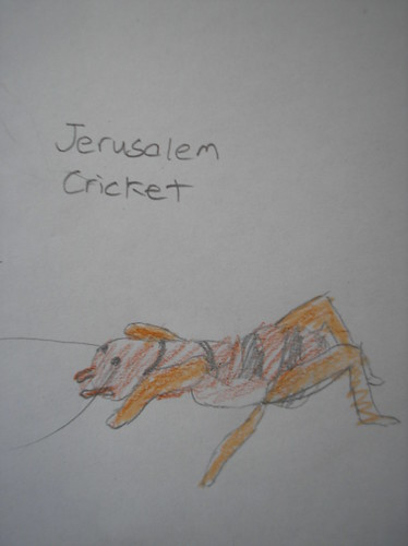 J Cricket Sketch