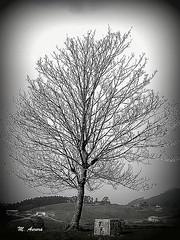 Contra el cielo (Aurora3) Tags: rbol invierno llanera 2008 solitario arlos asturies aurofot
