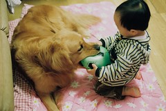 Hey!This is mine. (Mingyo/Lailee) Tags: boy dog pet film goldenretriever ball iso400 myson fujifilm     nikonfm3a mienshian xtra400   photobymingyo