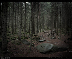 Yaremcha \ Bukovel (kUPa - facebook.com/stetsenko.igor) Tags: winter mountain nature ukraine горы bukovel karpaty yaremcha яремча буковель