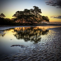 Mangroves (Christolakis) Tags: morning sunrise early brisbane mangrove lowtide soe themoulinrouge naturesfinest nudgee 100comments canon400d aplusphoto superbmasterpiece firsttheearth diamondclassphotographer flickrdiamond bestofaustralia theunforgettablepictures flickrslegend theperfectphotographer thegardenofzen flickrbestpics skyascanvas 100earthcomments herestoagreen09~yearofsustainableecoactiononplanetearth
