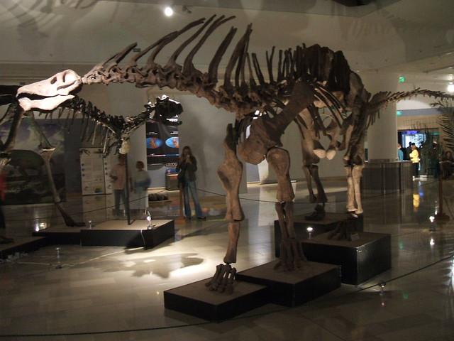 Amargasaurus cazaui II.