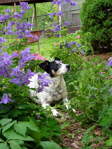 2008-05-23 - Flowers & Dogs - 0021