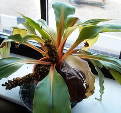 Our Mandarin Plant