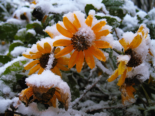 _first_snow_