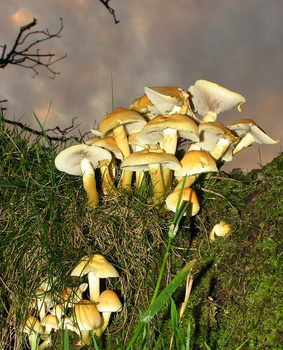 Fungi at twilight