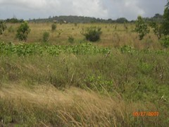 Galana countryside 1