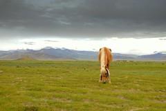 #3 (Luo Shaoyang) Tags: china horse nature landscape scenery tibet      nikond200   golddragon mywinners abigfave aplusphoto ultimateshot luoshaoyang colourartaward