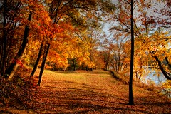 A Golden Day ( D L Ennis) Tags: autumn fall golden virginia day sunlit blueridgemountains jamesriver picnicgrounds abigfave anawesomeshot impressedbeauty superbmasterpiece dlennis diamondclassphotographer ysplix aglodenday