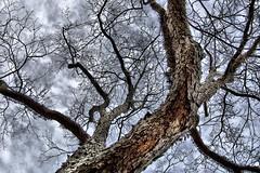 DSC_5266_edited-3 ( Dalton B.) Tags: tree nature nikon outdoor hdr naturesfinest 3xp d40 preservetnc07 bestnaturetnc07 scenicsnotjustlandscapes copyrightdaltonbryant daltonbryant