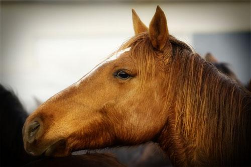 gathering mares 385
