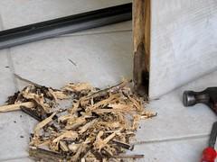 Rotten Front Door Wood