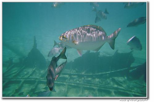 Grand Cayman Marine Life