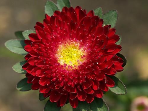 aa, Beautiful flower