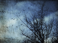 Prologue to A Moonless Night (Maxinne Marie) Tags: old blue sky tree texture nature birds silhouette marie angel night vintage dark freedom shadows branches grunge flight environment flightless prologue moonless digitalcameraclub maxinne