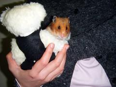20080308 - 15 (kayako_) Tags: hamster pon