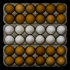 three dozen (barbera*) Tags: brown white easter box egg eggs plus ei oeuf uovo firstquality diamondclassphotographer flickrdiamond threedozen theperfectphotographer