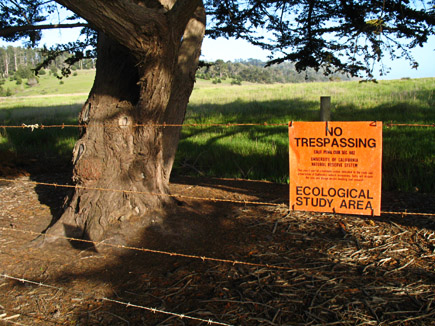 ecological study area at cambria on the central California coast