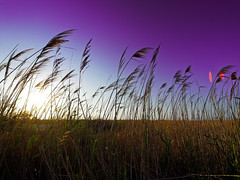 Purple breeze of change (Sator Arepo) Tags: leica sunset landscape evening reflex purple wind delta flare change breeze zuiko digilux deltebre deltadelebro 714mm digilux3 zd714mm gettyimagesiberiaq3