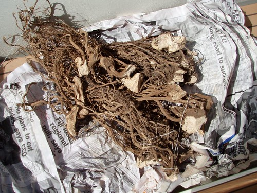 Bundle of kava root to give to chief