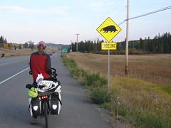 Cuidado zorrinos en la ruta