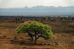 DSC06867_DxO_1_Bildgröße ändern (Jan Dunzweiler) Tags: afrika madagaskar fahrradreise radreise momotas africanbikers jandunzweiler horombe horombeplateau