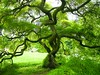 Spring Maple Tree (Stanley Zimny (Thank You for 29 Million views)) Tags: ny tree green garden botanical spring maple bronx thesecretlifeoftrees