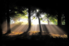 Come Into The Light (BarneyF) Tags: park light shadow sun tree forest liverpool landscape ray shots sunburst orton outstanding sefton outstandingshots anawesomeshot ultimateshot flickrelite lightofsummer