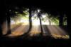 Come Into The Light (BarneyF) Tags: park light shadow sun tree forest liverpool landscape ray shots sunburst orton outstanding sefton outstandingshots anawesomeshot ultimateshot flickrelite lightofsummer