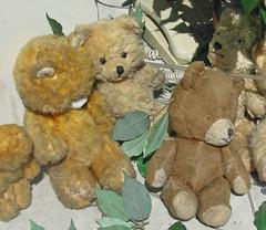 Le musée des ours en peluche (Vienne)