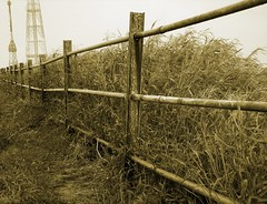 A walk along the fence