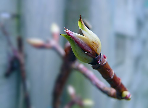 Promesa de primavera