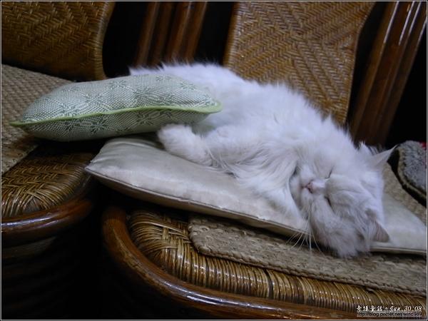 【貓季】似睡非睡間的新年快樂!