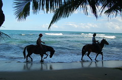 Perfect Tropical moment. (Blackstallionhills.com) Tags: travel vacation horses holiday home fun design perfect ride playa blackstallionhillscom